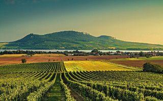 Vinařská oblast na Moravě je naprosto jedinečná.
